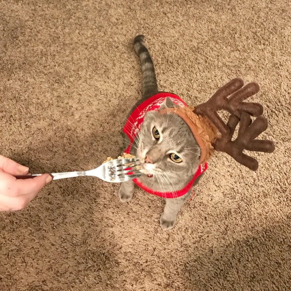 Murray the festive cat holds his own against a jambalaya pusher but is powerless to resist a belly rub. Christmas Jam 2016.