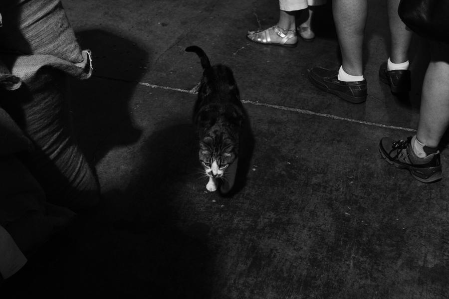 beckwith_coffeecat