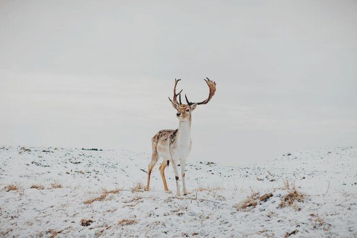 jmdphoto_deer