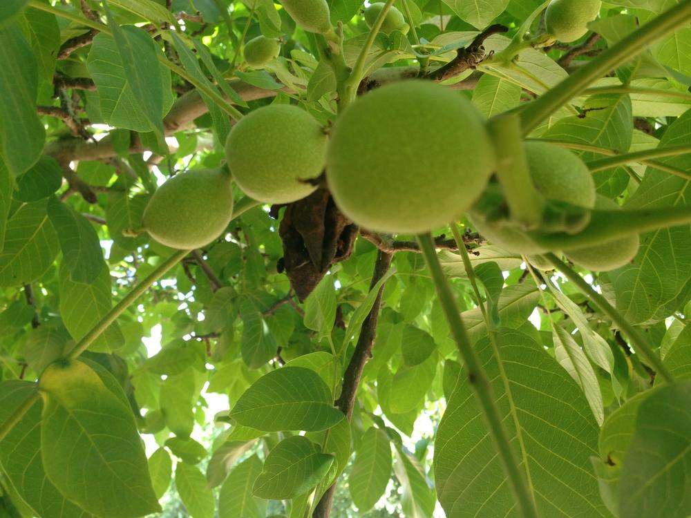 Our Fuzzy Peaches