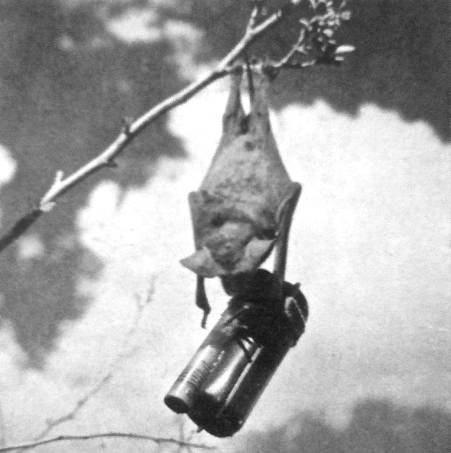Project X-ray suicide napalm bat bomb