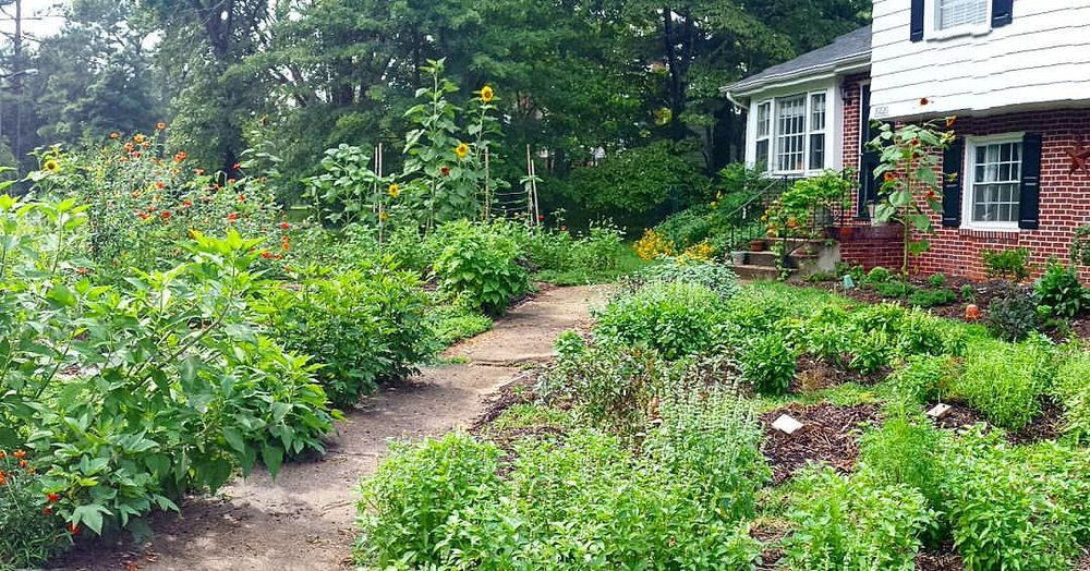 Amandau0027s Home Garden Which Has Blossomed Into Hummingbird Gardens