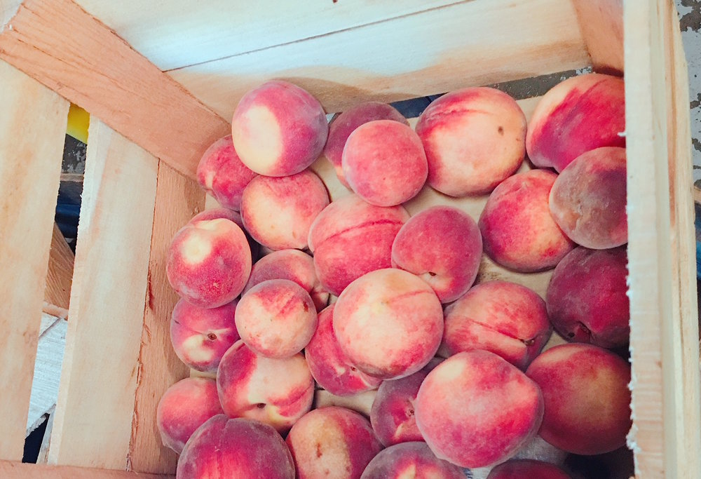 Peaches fresh from the farm for a new batch of mead.