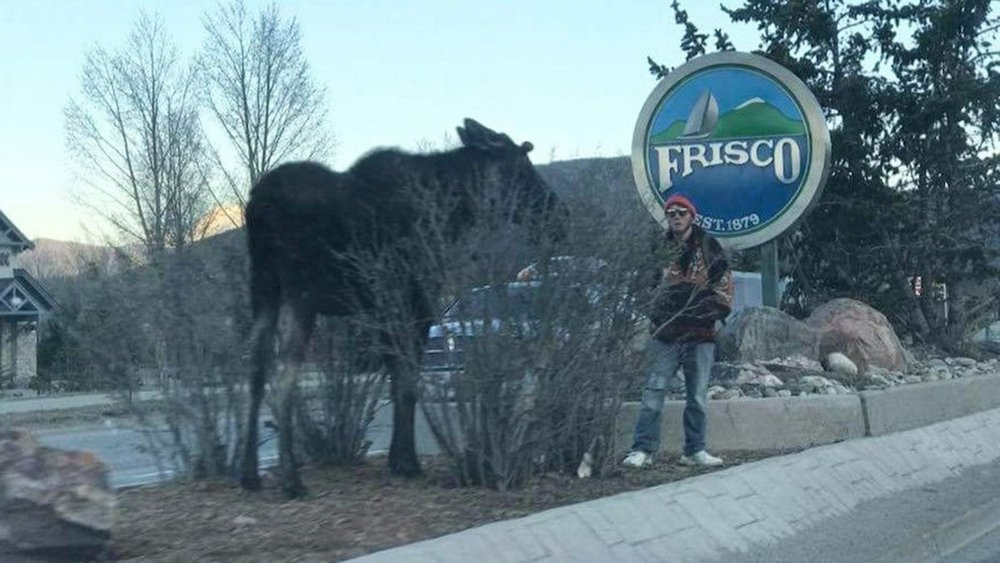 The Social Media Sleuths Hunting Down Moose Harassers