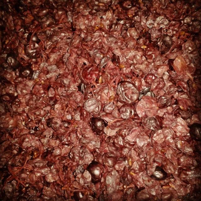 The end of vintage 2014 for The Other Right. Vine Vale Grenache pressed off and looking happy in the barrel