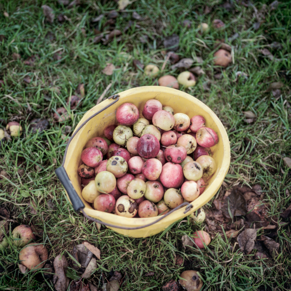 Cider_Making-8.jpg