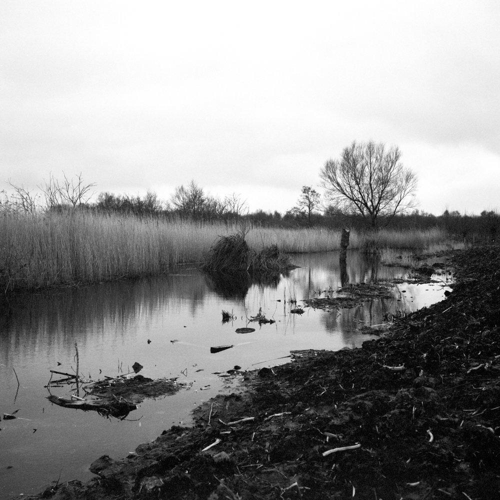 Pennleigh_Westhay Reserve