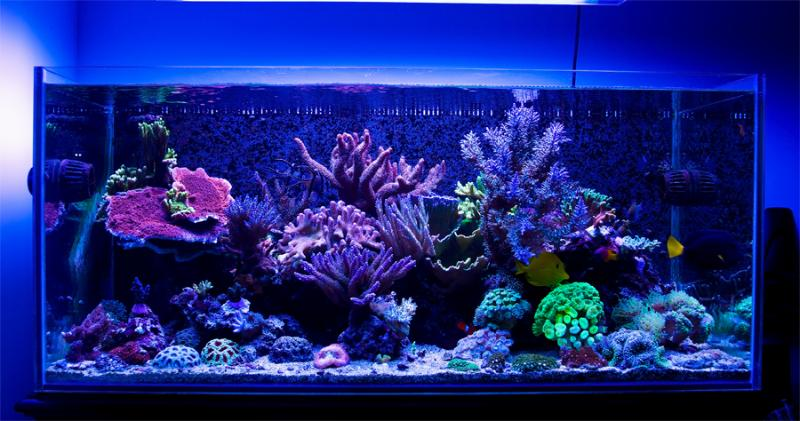 Aquarium of The Week: pmrg's Island Reef This week we are featuring an outstanding rimless saltwater reef aquarium by AquaticLog user, pmrg. You can see his creation by visiting his profile, but you should definitely set aside a few minutes of your day today to view this beautiful video he put together!  Pmrg is one of our newest members, but we hope to see continued amazing updates! :)