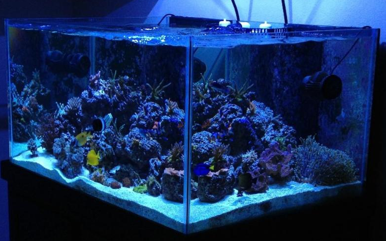 "This week we are featuring Kahanga-hanga Reef ni Leo, a 140 gallon aquarium of some really impressive dimensions (43.5"" x 30.5"" x 23.5""), that front-to-back distance really shows. Head over to this week's profile and enjoy a number of cool videos of this tank."