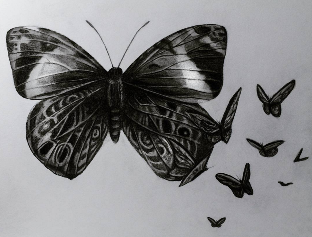 """Butterfly design, 2017, graphite on paper, 9x12"""""""