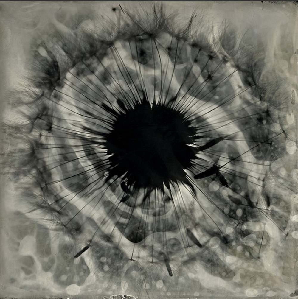 tintype photogram from the  Calligraphy  series by S. Gayle Stevens