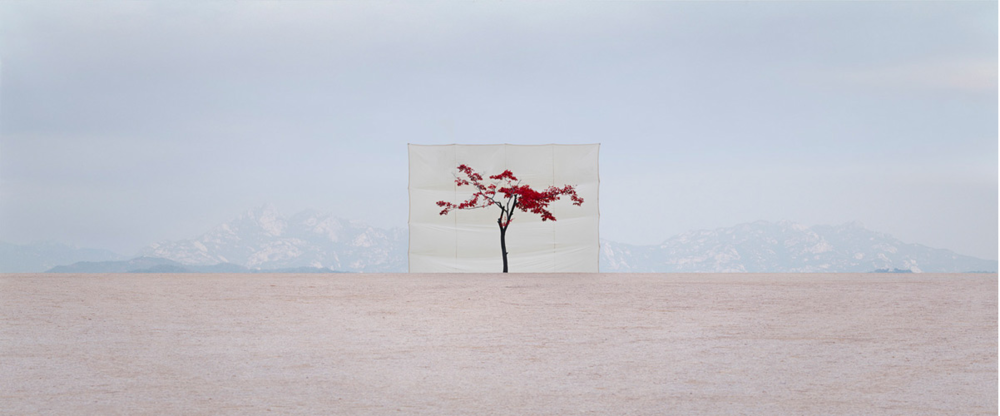 Tree #5, 2007  by Myoung Ho Lee, photograph I own from a special edition