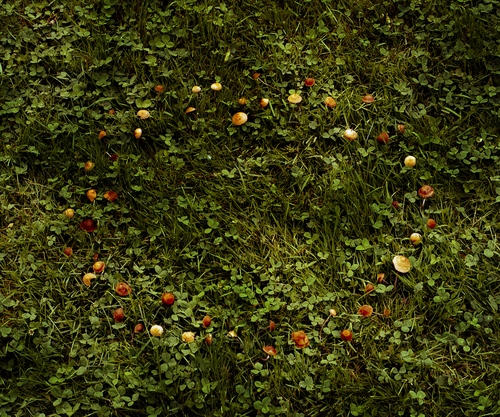 Mushroom Fairy Circle by Aaron Blum