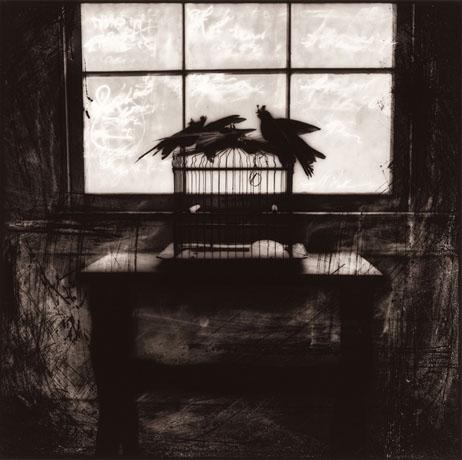 Birdcage, 1998, Carol Golemboski