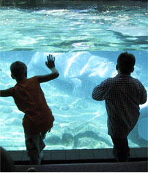Aquariums allow people, young and old a glimpse of the world underwater