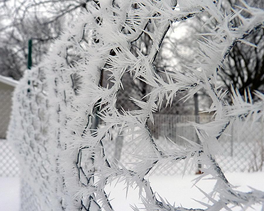 frost14.jpg