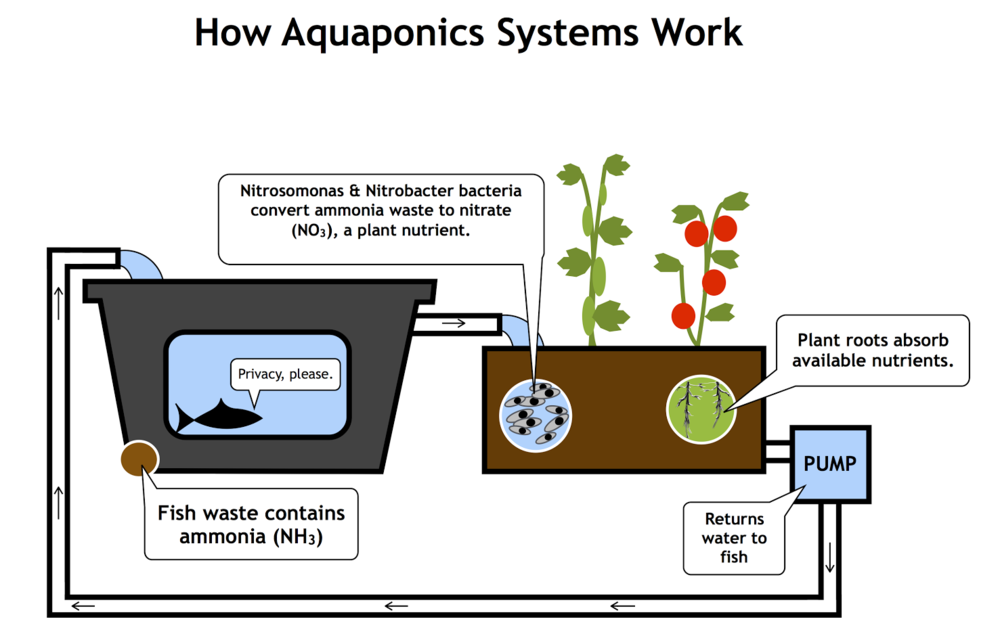 About Aquaponics Schoolgrown Aquaponics