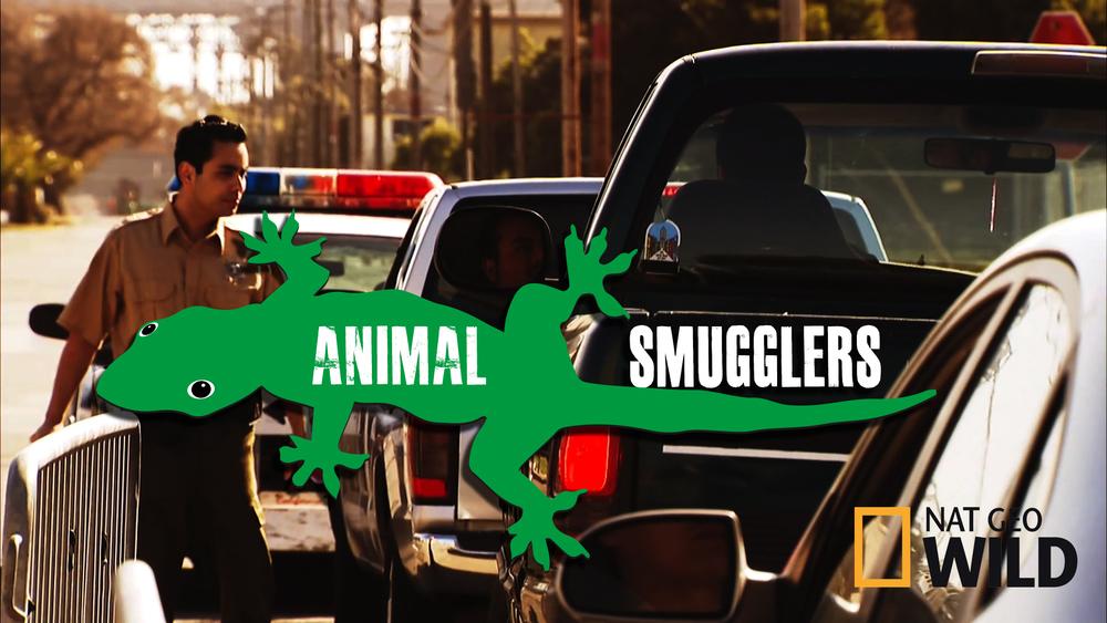 Animal Smugglers_NoIndigo.jpg