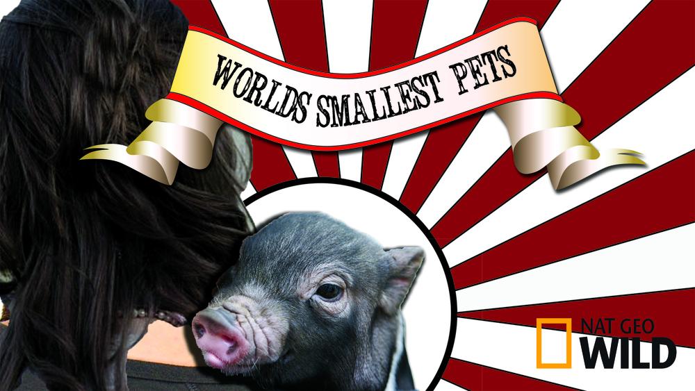 Worlds Smallest Pets_NoIndigo.jpg