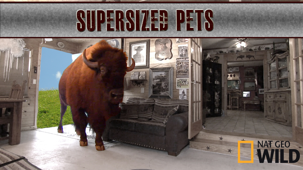 Worlds Largest Pets_NoIndigo.jpg