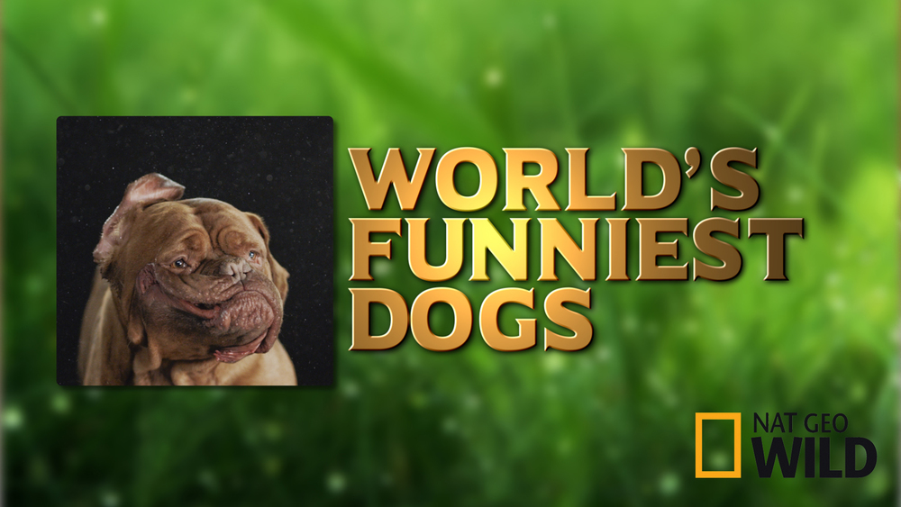 WorldsFunniestDogs_2048.jpg