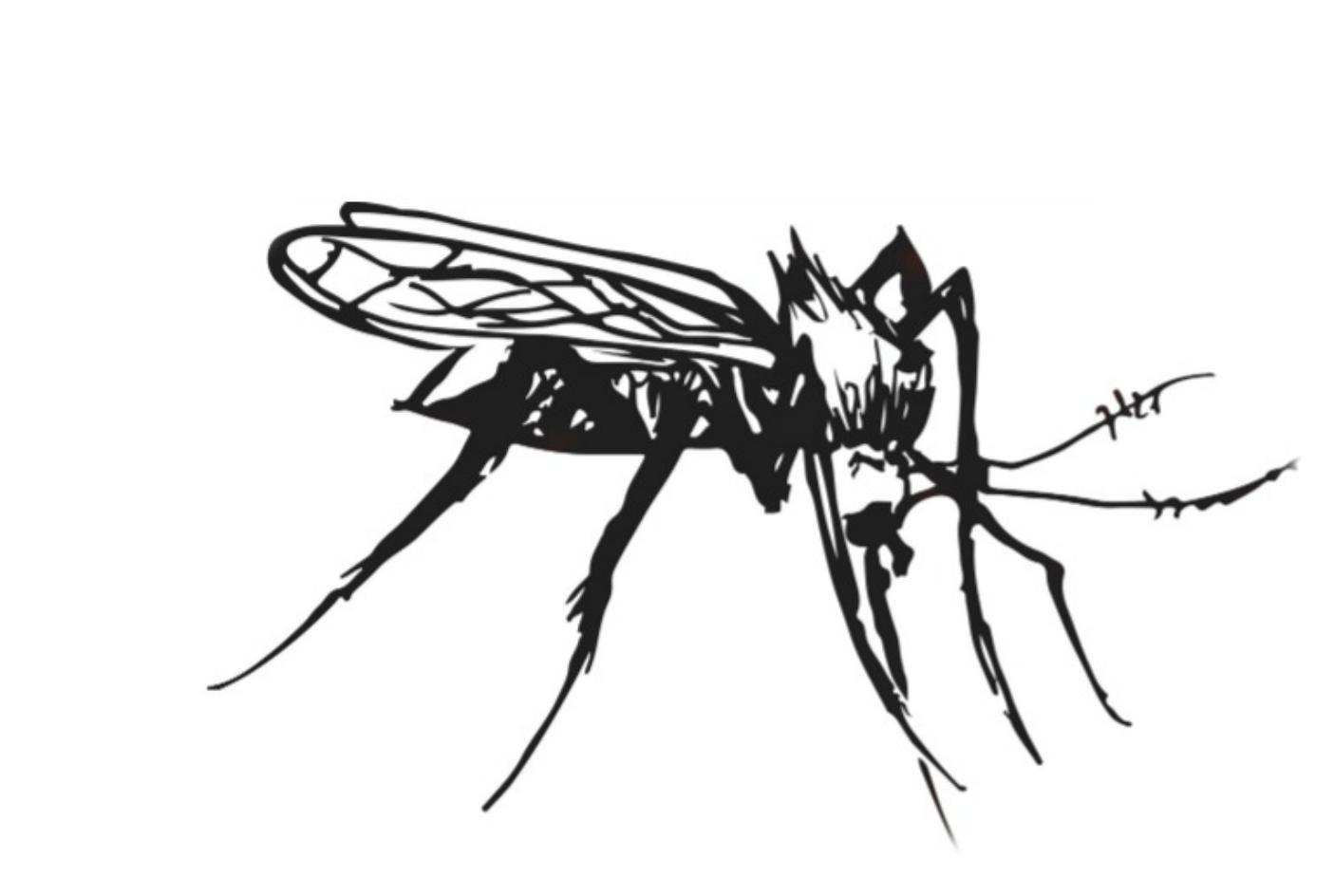 mosquito supper club