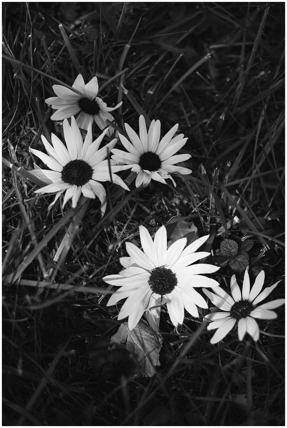 edenstraderphotography_0873.jpg