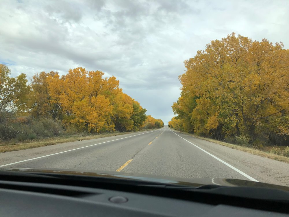 We drove back on 285 and got to see some gorgeous leaves!