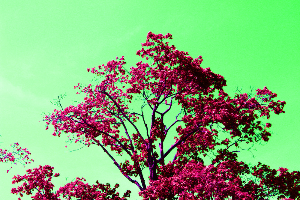 Photo Paint 9.jpg