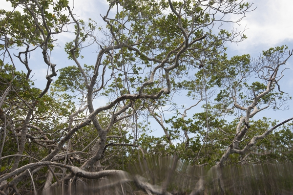 Mangroves of Turtle Lake. Photo courtesy of Neil Ever Obsorne and ILCP.