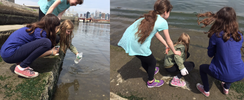 This was no easy task for the young scientists, as they had to travel to the waters edge to fill recycled plastic bottles of the creek water at low tide on the same morning. The locations were at the  North Brooklyn Boat Club , the Newtown Creek Nature Walk, Masbeth Ave. and English Kills. I volunteered to collect for them at English Kills due to the difficulty of gaining access.