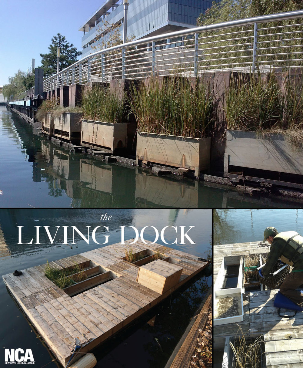 (above) Fabricated habitats along Whale Creek.    (below)  Living Dock  on No Name Creek. Click image for the website.