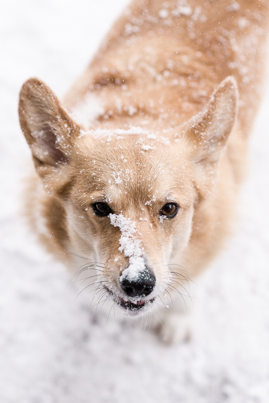 Bowen and His Snowy Nose