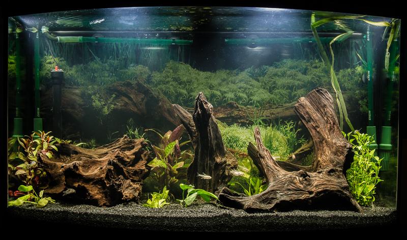 Setup my Fish-tank Again
