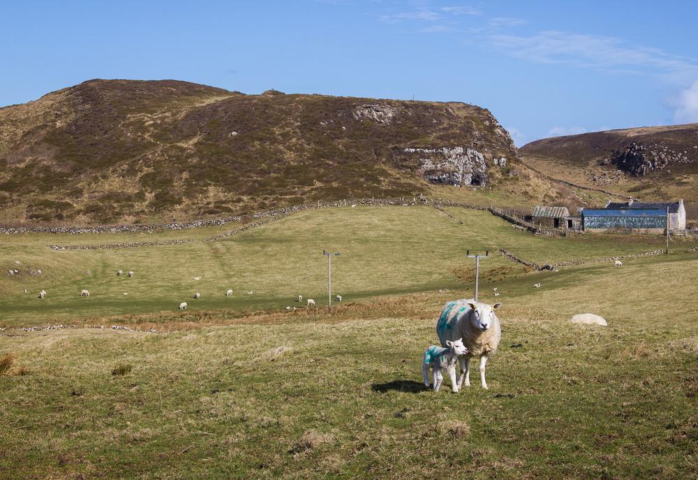 Springtime in Ballygill