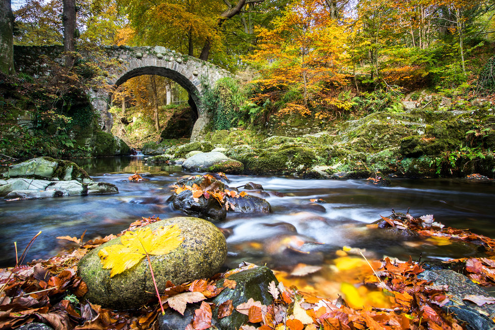 Foleys-Bridge-2016-leaf-website.jpg