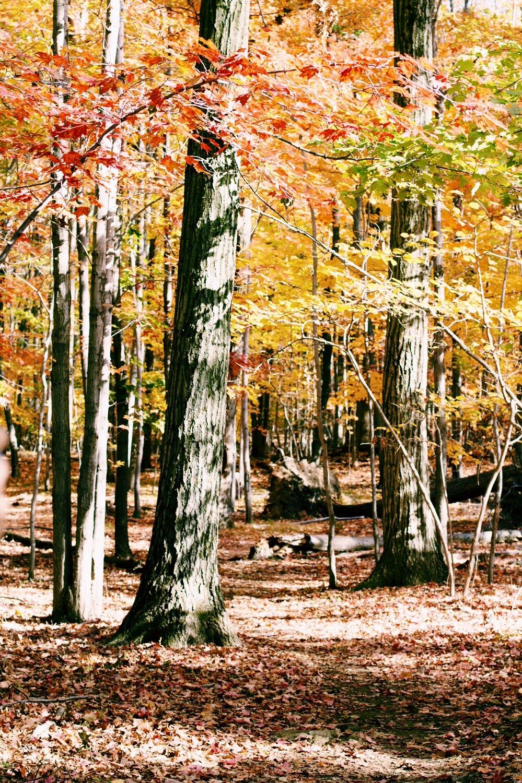 fall-nyc.jpg
