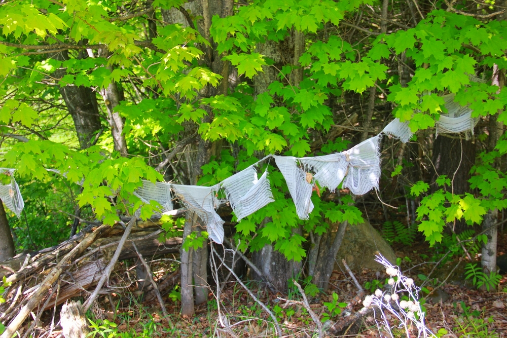 prayer flags in woods
