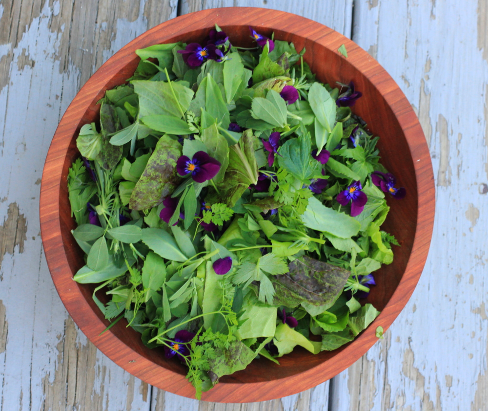 salad a friend brought for dinner with lettuce, alfalfa, chick weed, violet leaves and flowers, hen and chick leaves, korean celery, chervil