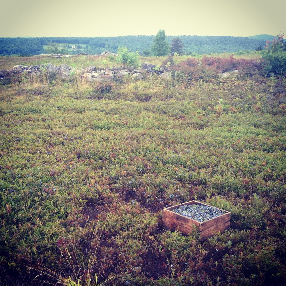 this is a summer throwback, but it certainly inspires! this was an epic farm in heath that has been in blueberries for hundreds of years.