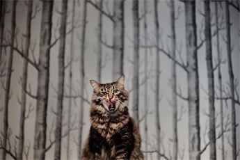 photo credit Fat Orange Cat Studios