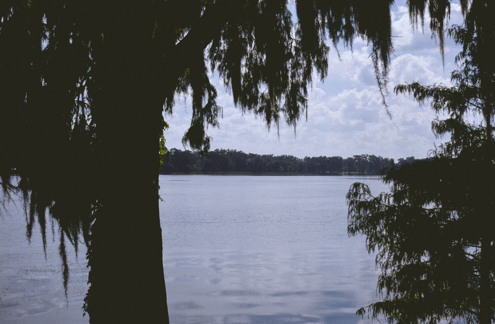 Trees along the lake at Rollins College, Florida. Taken with Canon AE-1.