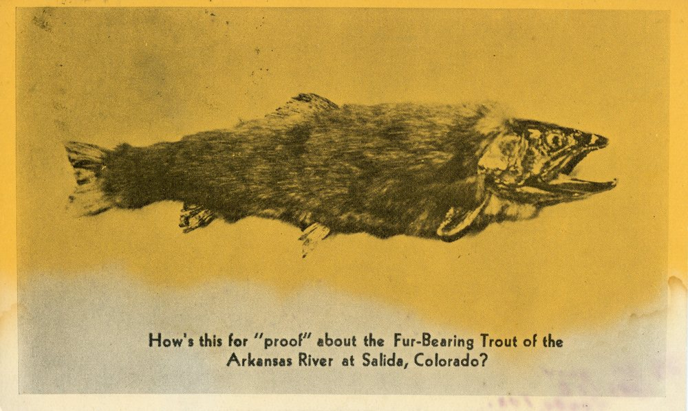 0204F_animals_NA_1940s_fish:weird:salida:colorado:fur:orange:XX:DLO.jpg