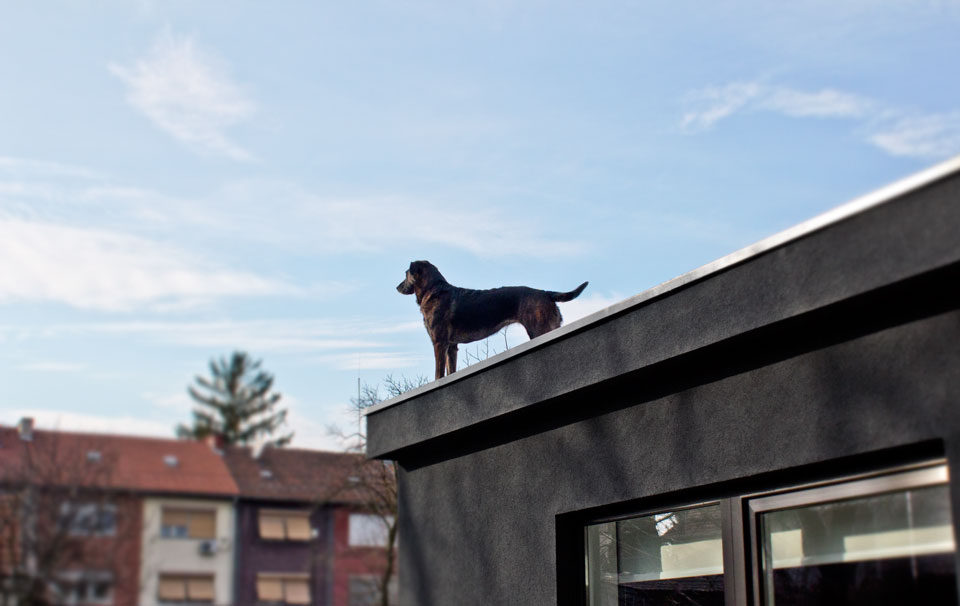 fedra-roof.png