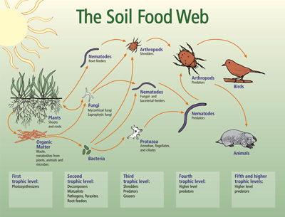 soil food web.jpg