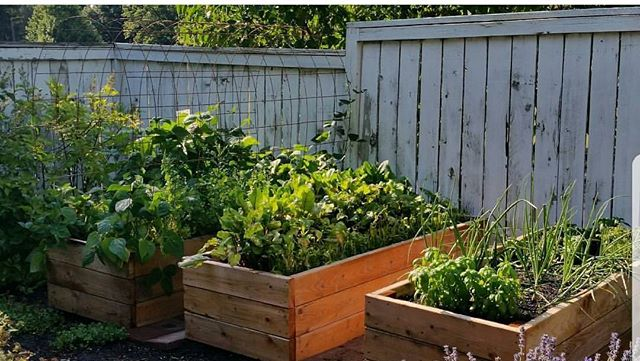 Look at these awesome productive beds from @matts.garden  Remember to tag us in your garden photos and use the #vgsorganic to get featured. 🌱