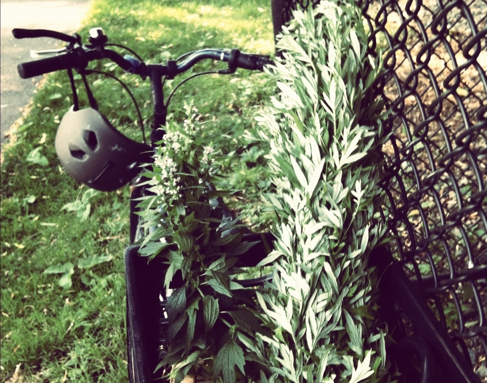 harvesting mugwort.jpg