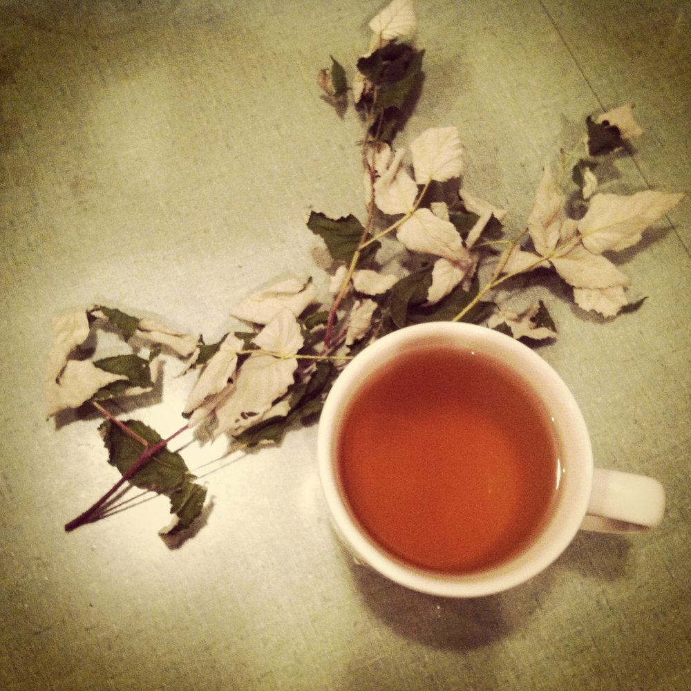 raspberry leaf tea S Zabel.JPG