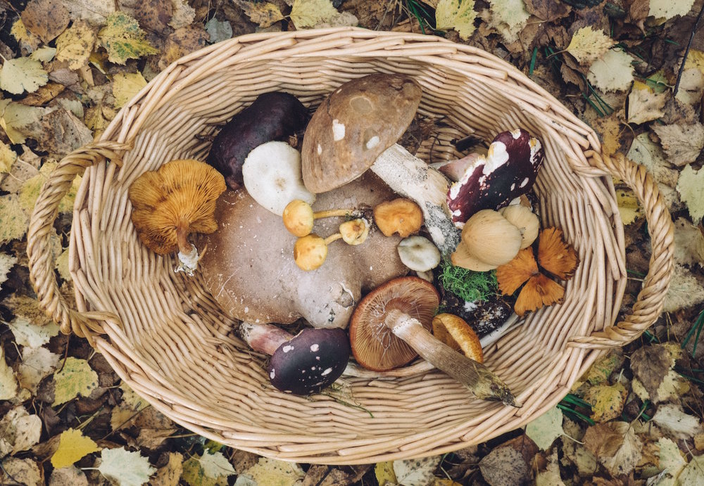 basket-full-of-mushrooms.jpg