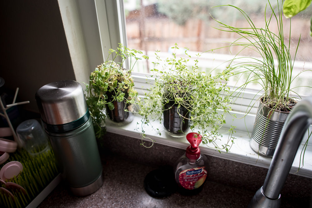 house-plants-at-home-birth